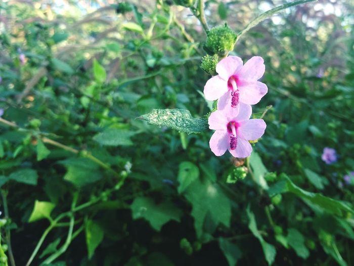 Flower Nature Day ดอกไม้ ลาว Laos EyeEmNewHere