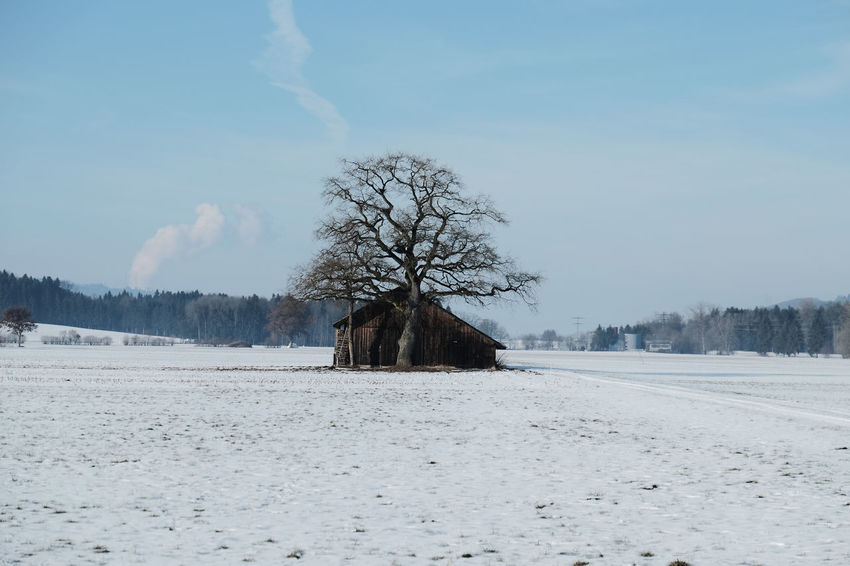 Bare Tree Beauty In Nature Cold Temperature Day Frozen Knutwil Landscape Nature No People Outdoors Sky Snow Switzerland Tree Tree Trunk Winter