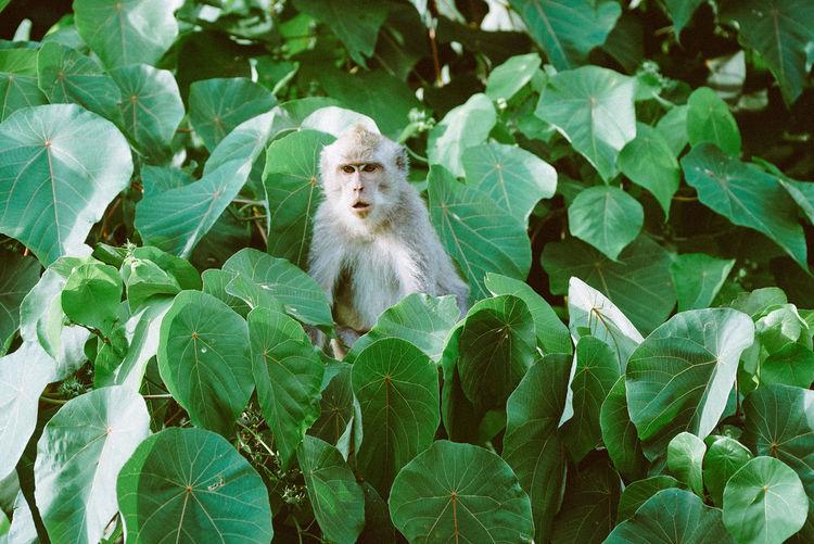 Wild monkey in