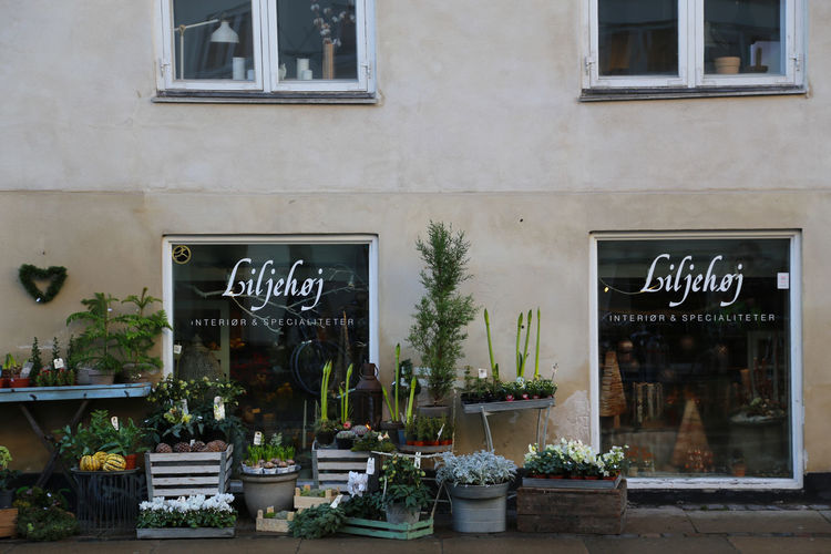 Copenhagen, Denmark Flowers,Plants & Garden Wintertime Architecture Bakery Blackboard  Building Exterior Built Structure Choice City Day Flowers Flowers, Nature And Beauty Flowershop Food Freshness No People Outdoors Retail  Shop Small Business Store Text Window