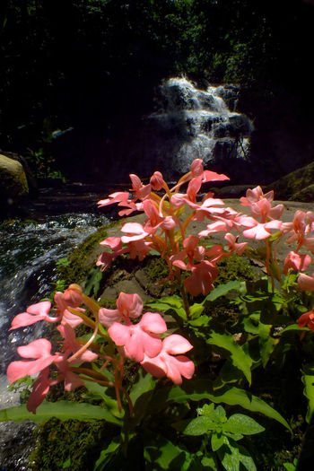 Snapdragon at Mun dang6 Water Nature Beauty In Nature No People Pink Color Plant Flower Growth Fragility Outdoors Freshness Multi Colored Day Close-up UnderSea Flower Head Waterfall Snapdragon Wild Flowers EyeEmNewHere The Week On EyeEm Travel Destinations Beauty In Nature Forest Beauty