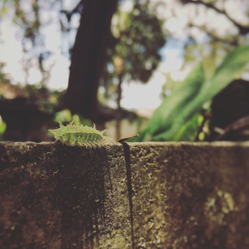 Catapiller Nature Nature_collection No People