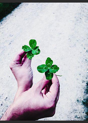 Good Luck Human Hand Cloverleaf Freshness Green Goodluck Fragility Kleeblatt Quadrifoglio