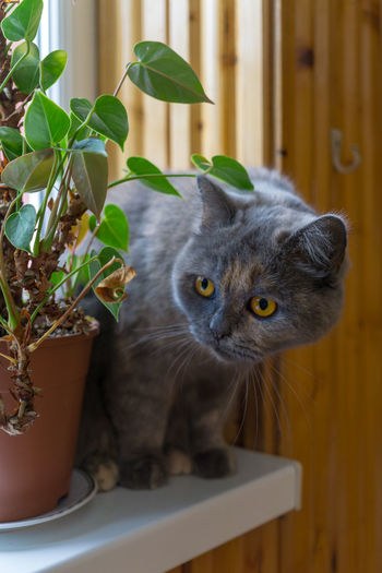 Animal Themes Animal One Animal Feline Pets Domestic Domestic Animals Mammal Domestic Cat Cat Portrait Potted Plant Plant Vertebrate Looking At Camera No People Leaf Plant Part Indoors  Nature Whisker Yellow Eyes Flower Pot