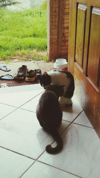 Cuidado das irmãs Cats