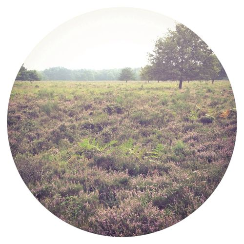 Wahner Heide. Nature Landscape Landscape_Collection