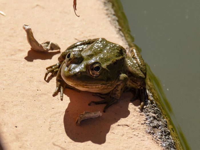 Close-up of frog on sand
