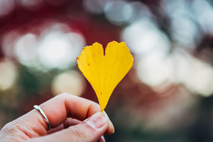 Cropped hand of woman holding yellow petal