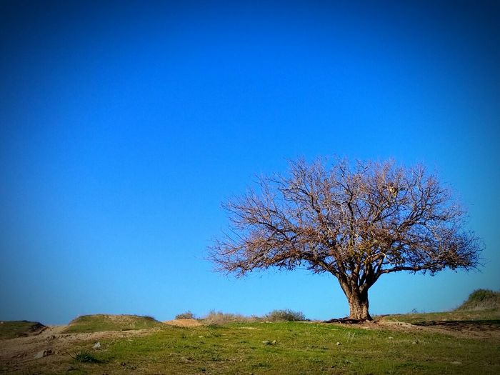 Tree Clear Sky Blue Nature Sunny Sky No People Beauty In Nature GrowthTree Idyllic Beauty In Nature Nature Single Tree Outdoors Tranquility Day Grass Neighborhood Map