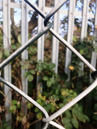 edgy Safety Security Protection Fence Metal Chainlink Fence Focus On Foreground Day No People Outdoors Plant Growth Close-up Built Structure Nature Barrier EyeEm EyeEm Nature Lover EyeEm Gallery