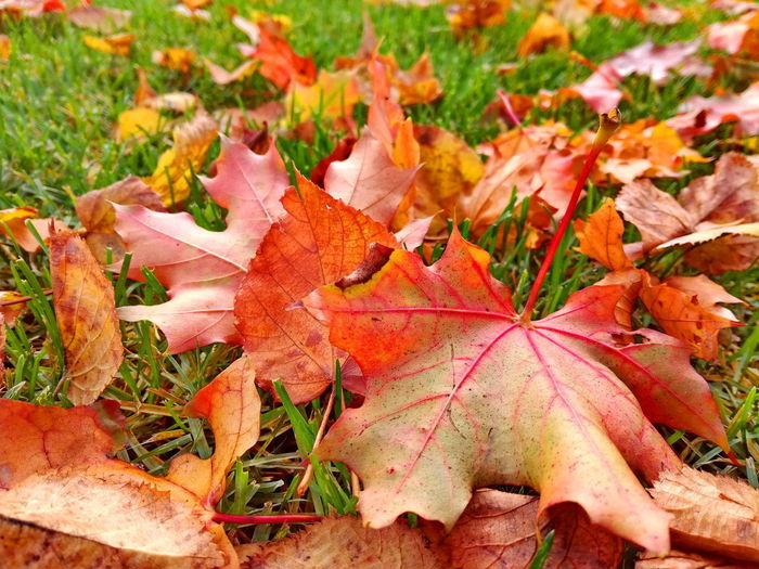 Autumn Leaf Change Nature Outdoors Day Beauty In Nature No People Grass Close-up