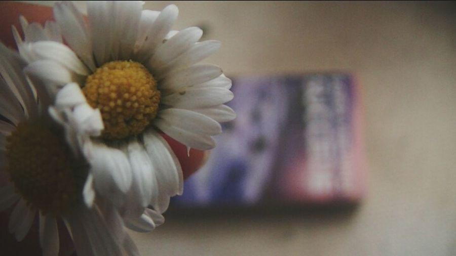 Flower Nature Book Succede Sofiaviscardi Daisy Plants 🌱 Romance