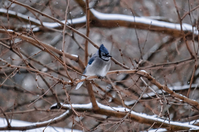 Bird perching on snow covered bare tree