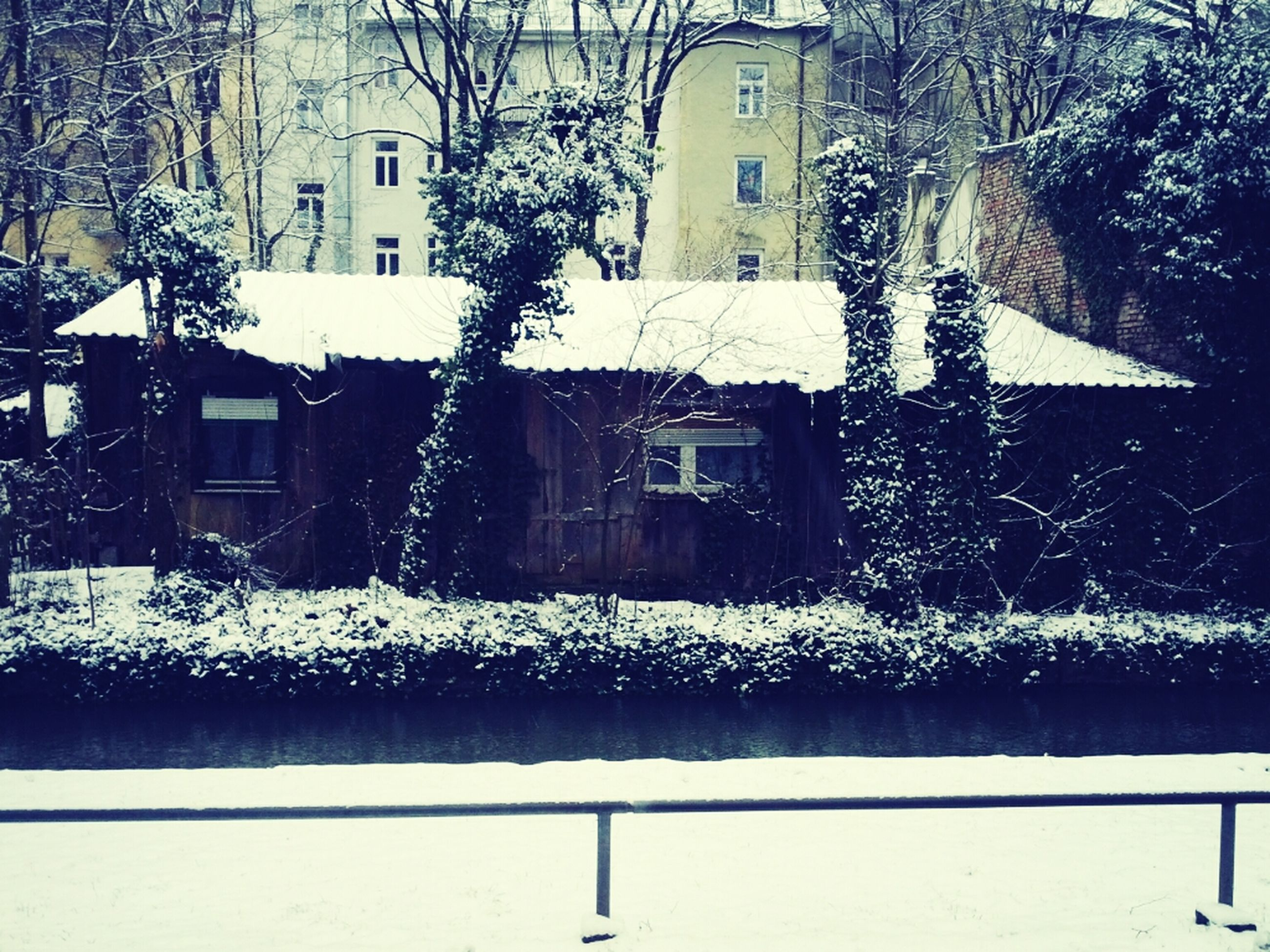 building exterior, architecture, built structure, snow, winter, cold temperature, season, house, residential building, tree, residential structure, weather, covering, window, bare tree, white color, city, building, nature, day