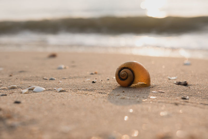Animal Animal Shell Animal Themes Animal Wildlife Animals In The Wild Beach Beauty In Nature Close-up Day Gastropod Invertebrate Land Marine Mollusk Nature No People One Animal Outdoors Sand Sea Selective Focus Shell Snail Surface Level