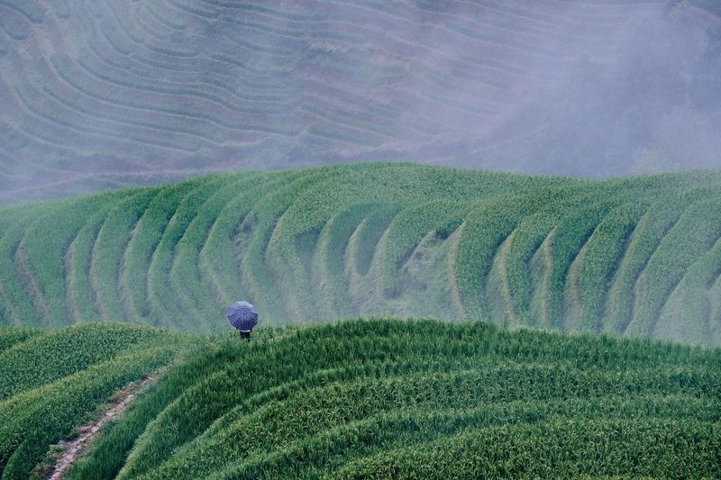 Person On Tea Crop Field