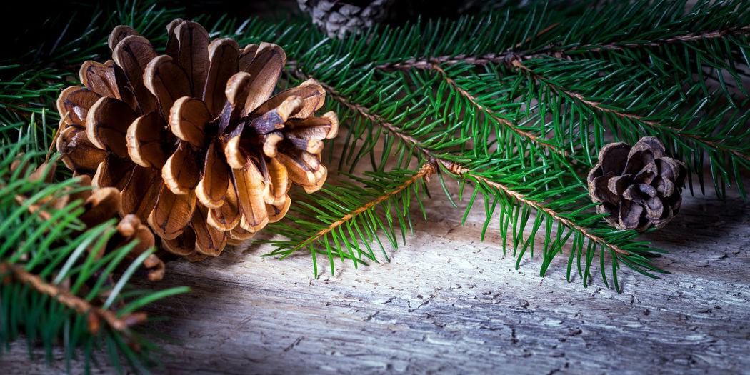 sprig of fir