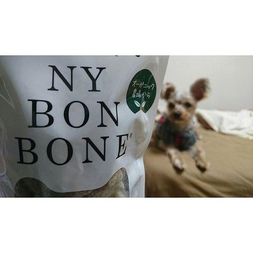 ∴好き嫌いの多い犬のためのおやつ。 クッキーだったからちょっと食べるか不安だったけれど、きゅうちゃん食べた! 好き嫌い多め 犬用 おやつ 東急ハンズ ヨークシャーテリア ヨーキー Yoki Dog Kyu Nybonbone