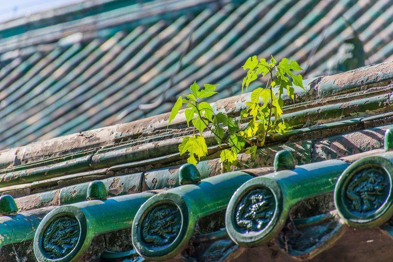 地坛的秋天 Green Color Outdoors 北京 北京 Beijing First Eyeem Photo