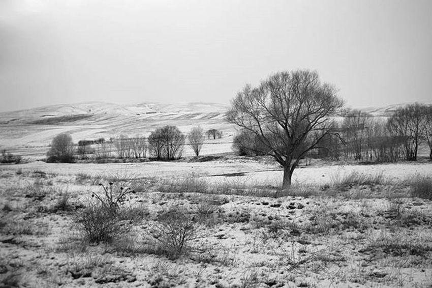 """""""آن روز ها رفتند آن روز های برفی خاموش کز پشت شیشه در اتاق گرم هر دم به بیرون خیره میگشتم""""-فروغ فرخزاد برف شعر درخت غم فروغ_فرخزاد خشک عکاسی Photography Iran Landscape Fineart Nikon Nikond3300 Snow Sorrow Nikontop"""