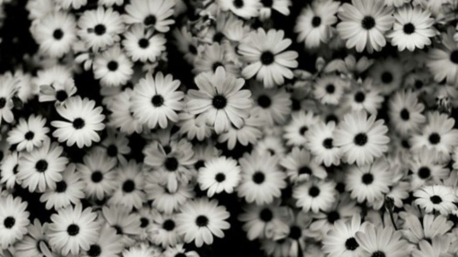 Flowers Look At The Flowers Beautiful EyeEm Nature Lover Open Edit 👽⚡️🌈🌼🌹🌻