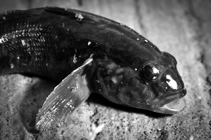 Fish out of water. Fish Last Breath Fishing First Eyeem Photo