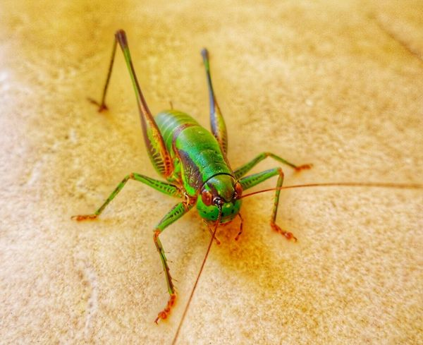 One Animal Insect Animal Themes Animals In The Wild Close-up Animal Wildlife Nature No People Outdoors Day