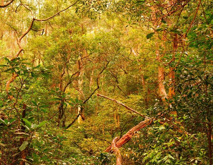 Nature Tree Forest Growth Lush Foliage Rainforest Wilderness Leaf Beauty In Nature Outdoors No People Environment Tranquility Summer Branch Landscape Scenics Day Ecosystem  Lush - Description