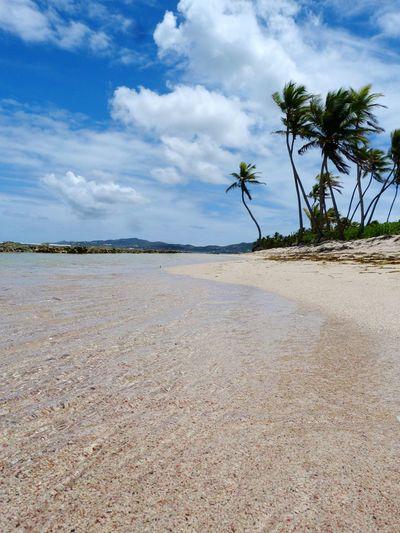 RePicture Travel Caribbean Stcroix Ocean VirginIslands Beach Palmtrees