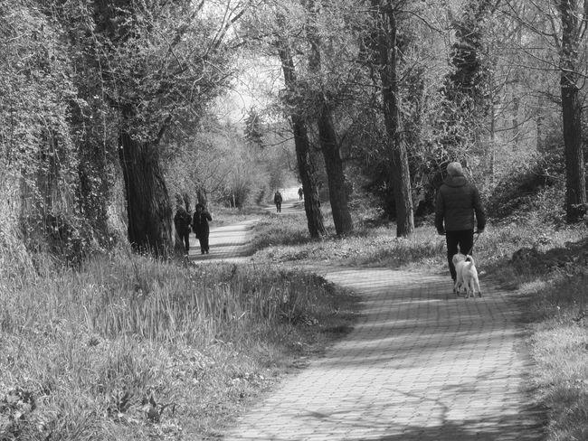 #animal #basilicata #black And White #Black&White #blackandwhite #dog #fotobianconero #Italia #italy #old #potenza #potenzainferiore #vialedelbasento