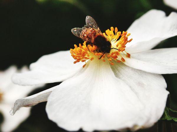Während dem Pollensammeln gestorben.