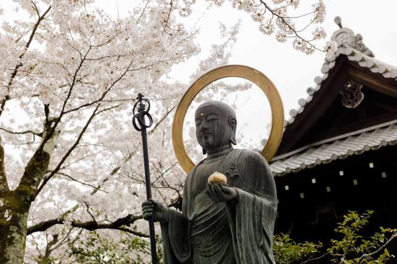 Japan Sakura Temple Buddhism Kyoto Cherry Blossoms Japanese  History Japanese Temple Buddhist Temple
