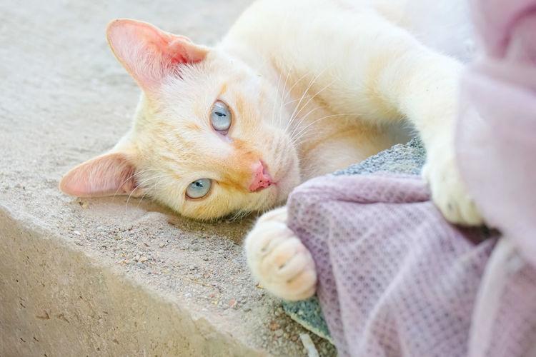 Portrait of cat lying