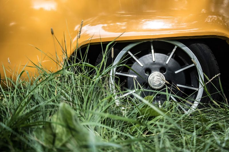Close-up of grass in car
