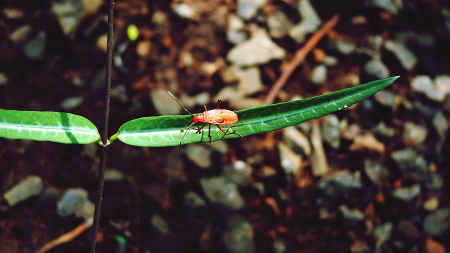 Insects Beautiful Nature Insect Macro  Red On Green Colours Of Nature Outdoors SmallplantGreenleaf Stones And Pebbles Sunlight Through Trees