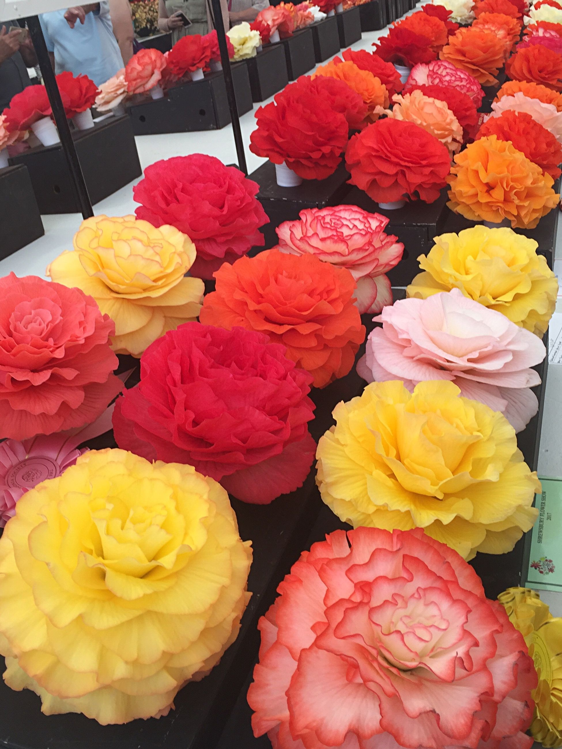 flower, variation, freshness, multi colored, retail, choice, no people, for sale, arrangement, petal, fragility, rose - flower, flower head, flower market, yellow, beauty in nature, close-up, market, flower shop, bouquet, indoors, day, nature