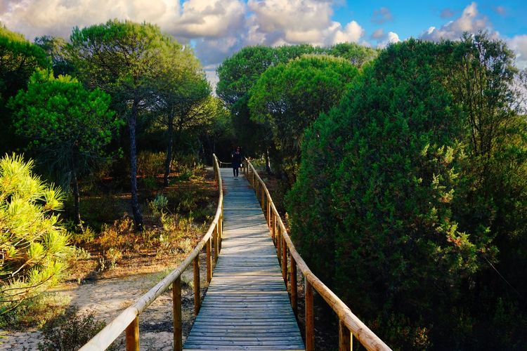 Footbridge amidst plants in forest