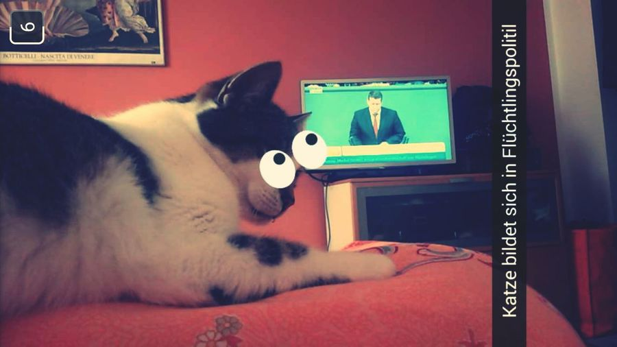Reasons my cat is cooler than yours Political Cat