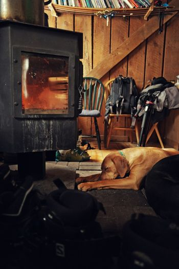 Dog tired. Wood Stove Stove Fire Fireplace Dog Dog Tired Tired Exhausted Sleeping Warmth Warm Warm Feeling Relaxing Mountain Life Sleeping Dog Drying Fire Fireplace Wood Stove Stove Dog Dog Tired Exhausted Sleeping Dog Warm Warmth Warm Feeling Relaxing Workshop Blacksmith  The Still Life Photographer - 2018 EyeEm Awards Autumn Mood