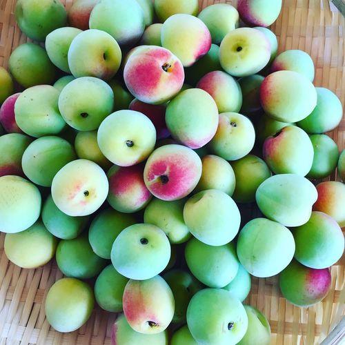 Plum Plum Syrup Japan Tokushima Japanese Food 梅シロップ Health Food 美郷 日本の風景 Natural Food 四国