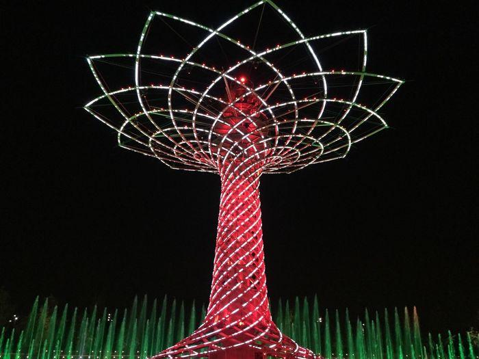 Expo No People Low Angle View Night Outdoors Sky Milano Italia Tree Treeoflife Remember Remberberthosetimes