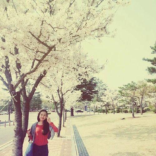 그대 앞에 봄이 있다.봄 봄스타그램 꽃구경