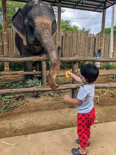Full length of boy standing against elephant at zoo