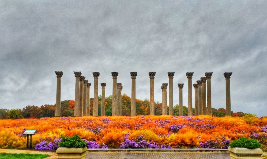 CAPITOL Columns looking nice for fall. Usnationalarboretumd