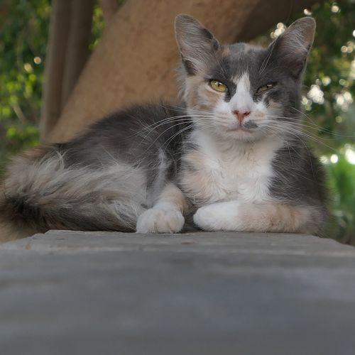 Animal Themes Animal Mammal One Animal Pets Domestic Domestic Animals Cat Domestic Cat No People Feline Portrait Day Looking At Camera Selective Focus Outdoors Nature