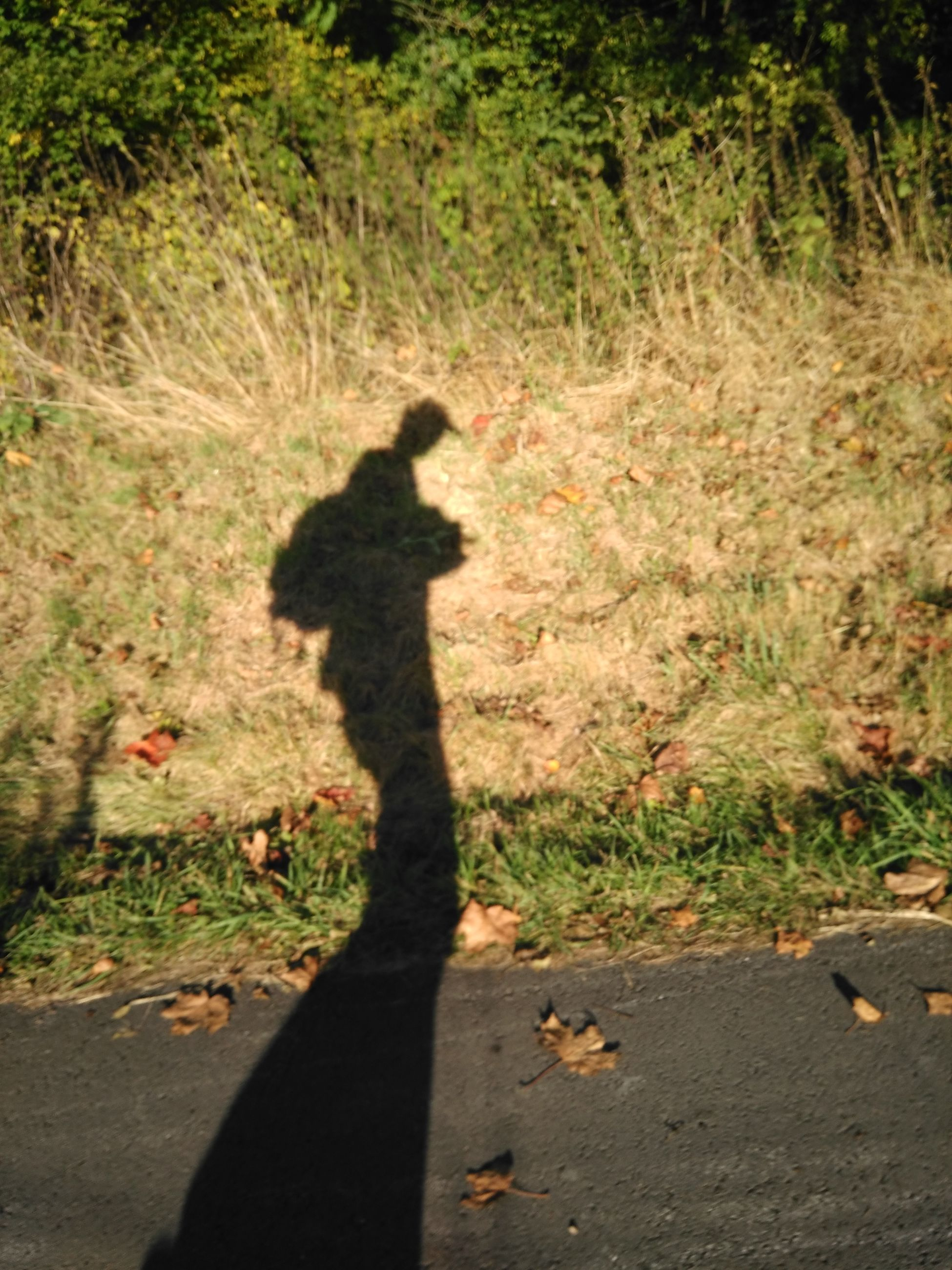 shadow, sunlight, real people, focus on shadow, one person, lifestyles, leisure activity, day, outdoors, nature, men, one animal, standing, pets, tree, dog, grass, mammal