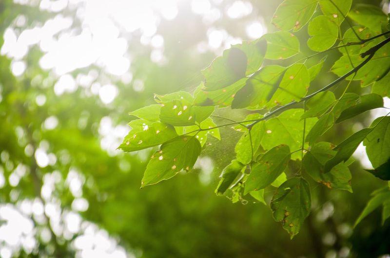 Green Morning!
