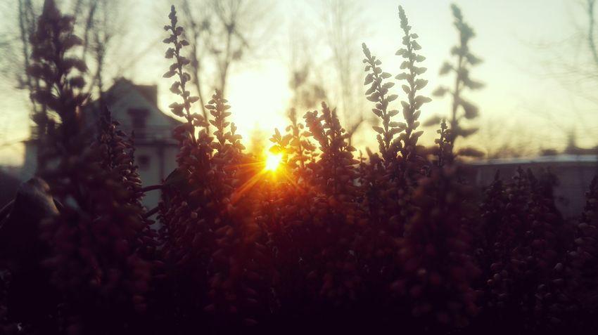 Hi World Good Morning Sky Lover View Selective Focus EyeEm Best Shots EyeEmNewHere Morning Light In Morning 😌ahhhh😌 Tree Flower Defocused Sunset Rural Scene Sunlight Silhouette Sun Backgrounds Summer Flower Head Focus Single Flower Wildflower Uncultivated