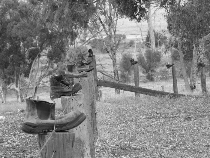 Boot-i-ful Fence Australia Australian Australian Landscape Black & White Country Country Living Trees Blackandwhite Blackandwhite Photography Bootspotting Country Life Countrylife Fence Fencepost Fences Outdoors