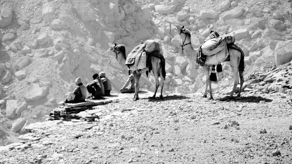 Rocks And Minerals Sinai The Traveler - 2015 EyeEm Awards Relaxing Animal Photography People Of EyeEm People Watching Traveling Travel Photography blackandwhite On The Way The Journey Is The Destination Mountains Beduines Rest Relax Miles Away